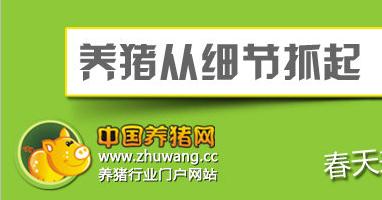 春季养猪注意事项-养猪从细节抓起,从疫病防治开始-中国养猪网专题