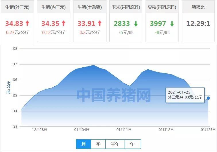 """1月25日猪价:猪价略有上涨,会是""""昙花一现""""吗?"""
