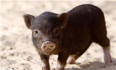 04月09日猪价:大幅度下跌